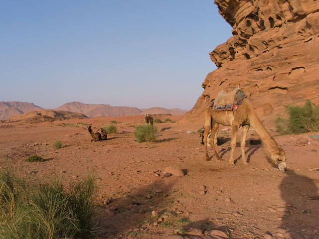 Wadi Rum 2016